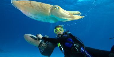 Vigilant Divers Anguilla