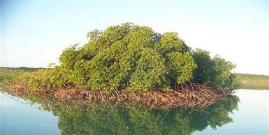 Grand Bahama Nature Tours