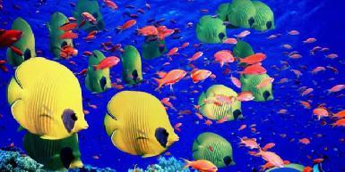 Fat Fish Adventures