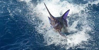 High Seas Fishing Charters